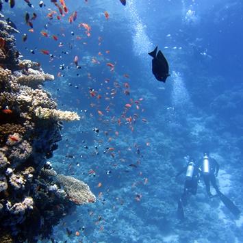 divers-underwater-ocean-swim-68767ы