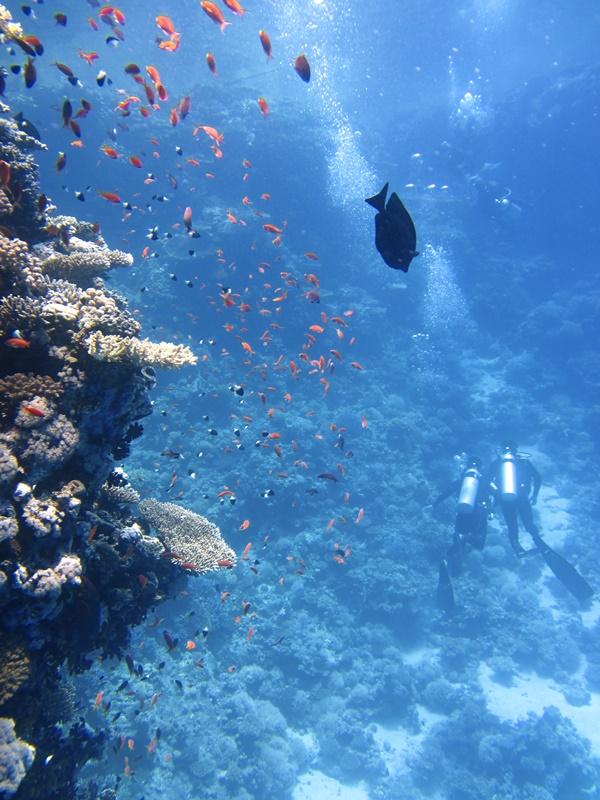 divers-underwater-ocean-swim-68767