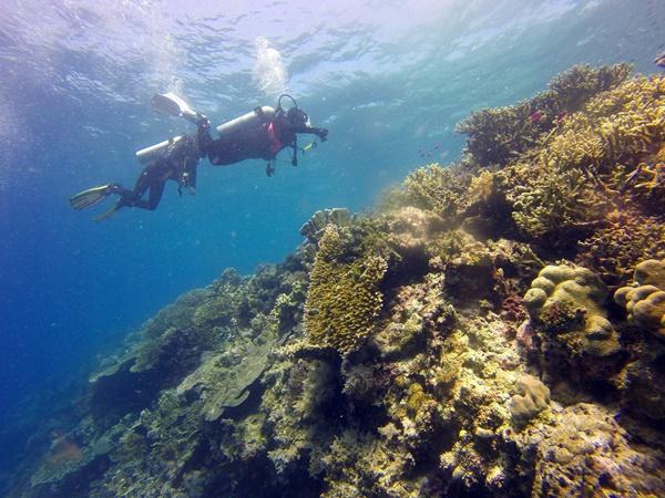 scuba-diving-1300844_1920